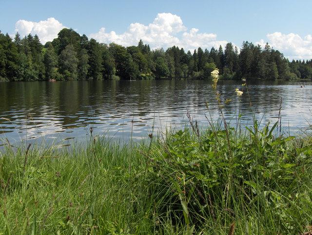 Sommer am Schwaltenweiher