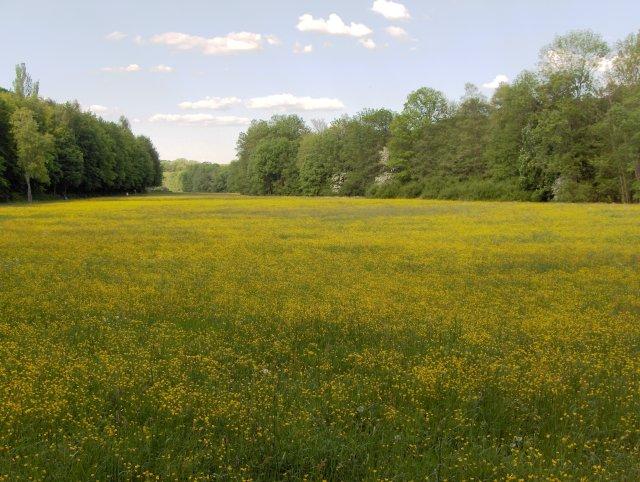 Lindental bei Wolfbusch