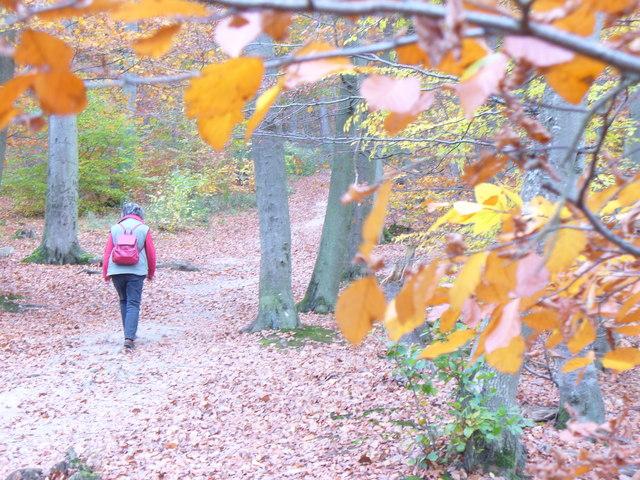 Herbstliche Farben bei Burg Eltz