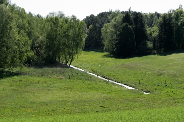 Wald & Wiese bei Zootzen