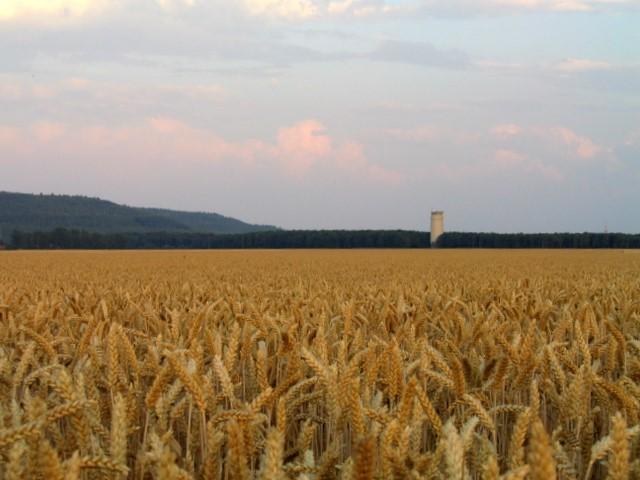 """""""Leuchtturm"""" Jülich, Blick über die Felder"""