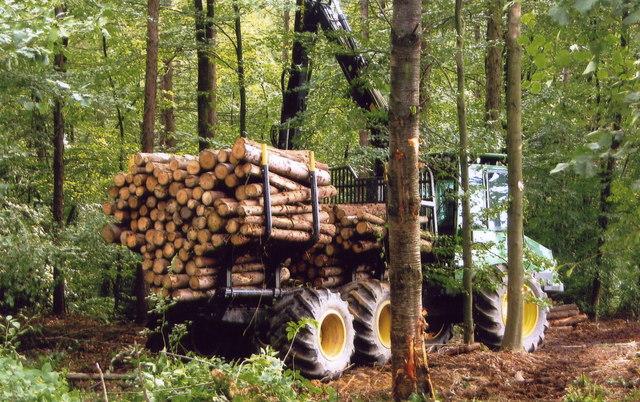 Einsammeln von Baumstämmen