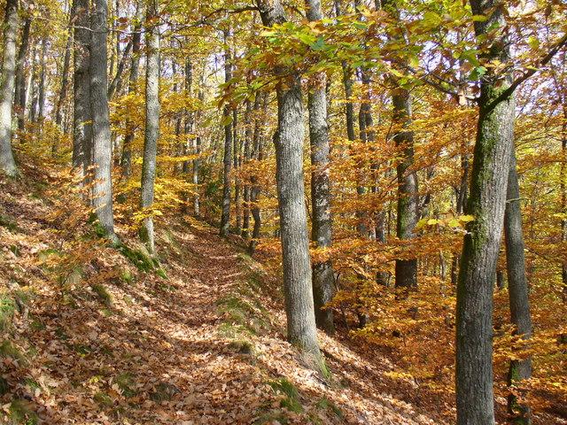 Im Stadtwald Neuerburg