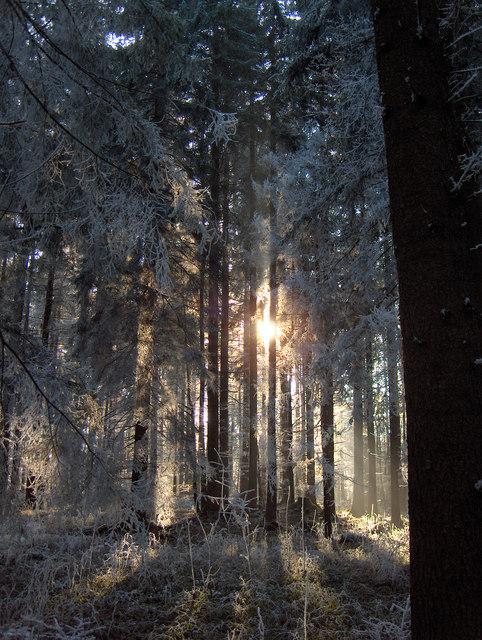 Winterstimmung im Senkelewald