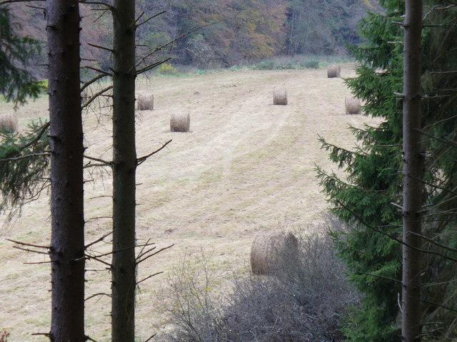 Liesertal nordlich vom Eckfelder Trockenmaar