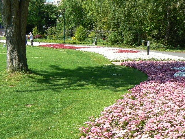 Blumen im Stadtspark