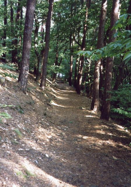 Pfälzerwald - Gimmeldingen