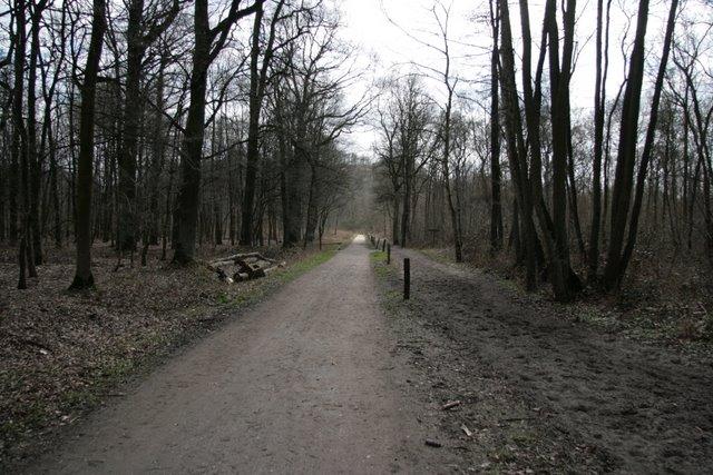 Wald- und Reitweg im Hülser Bruch