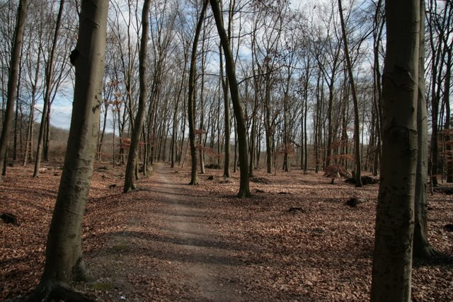 Buchenwald im Hülser Bruch