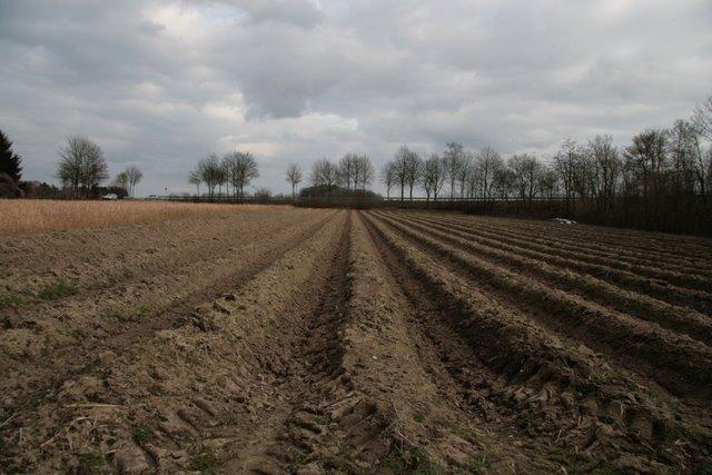 Kartoffelacker bei Klinkhammer
