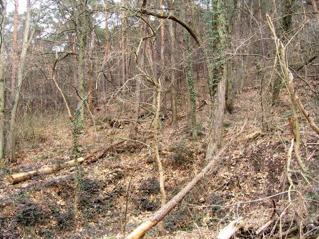 Pfälzerwald (Frühling) - Gimmeldingen