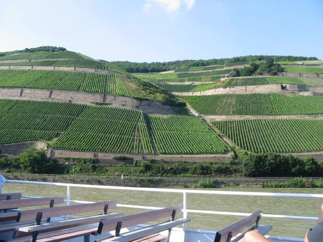 Weinberge nahe Bingen am Rhein