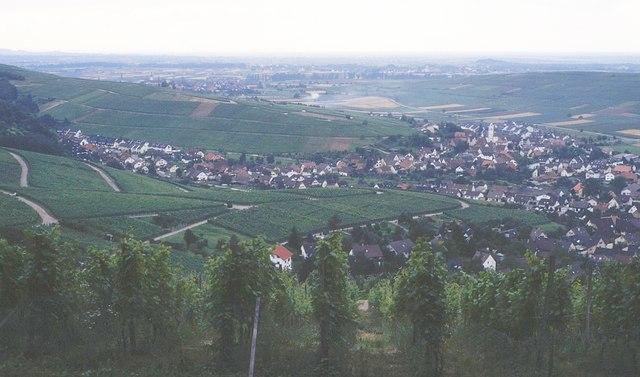 Weinberge bei Ohlinsweiler