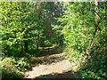 UMA8336 : Forest west of Bulau, Rödermark von Brian Robert Marshall