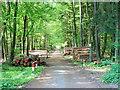 UMA8437 : Track through the forest von Brian Robert Marshall