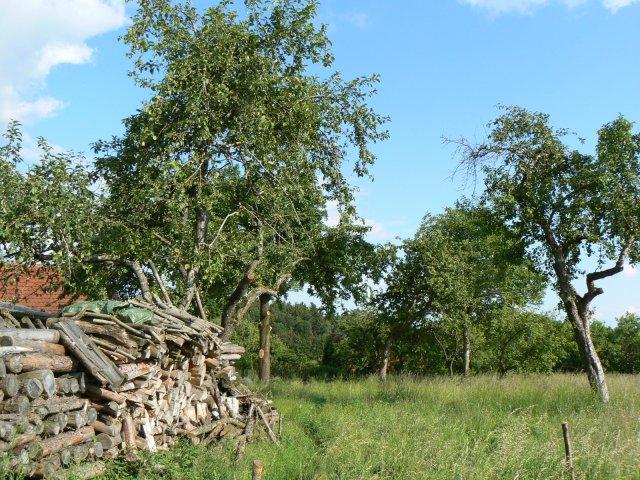 Holzstapel im Obstgarten
