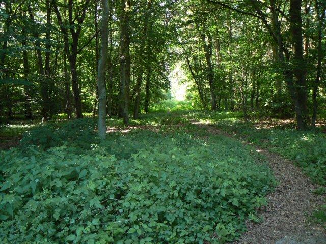 Fußpfad im Wald