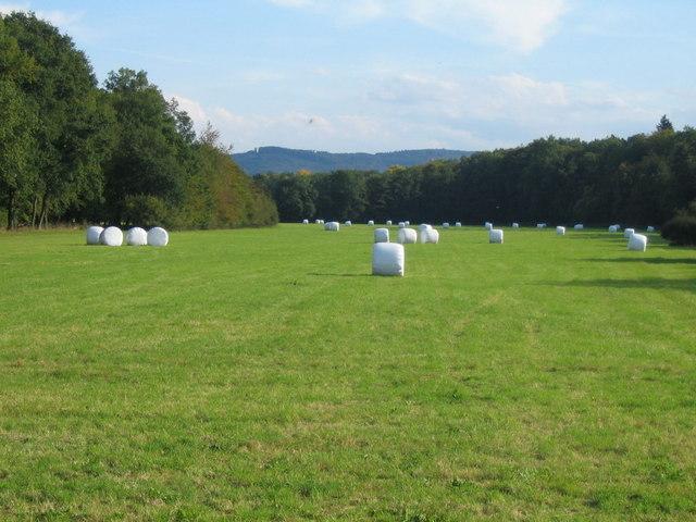 Wiese südlich des Golfplatzes Gut Scheibenhardt