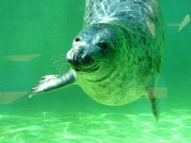 Seehundstation Norddeich (Seal sanctuary in Norddeich)