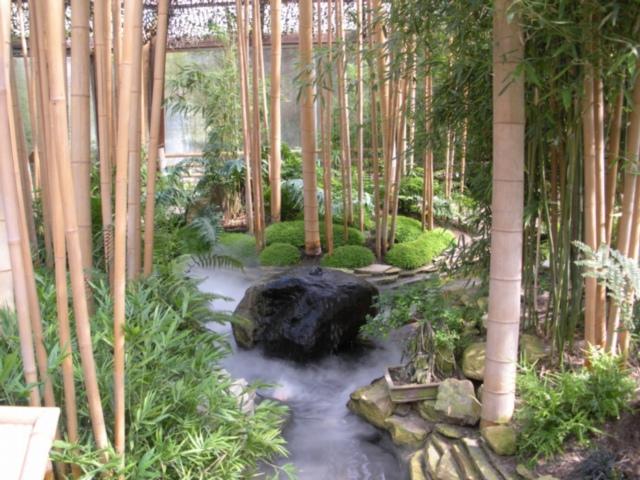 Bambus garten  Bambusgarten im Schmetterlingsgarten Ludwichslust:: MGRS 32UNE8832 ...