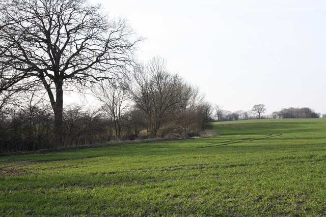 Feld mit Knick (Field with Hedgerow)