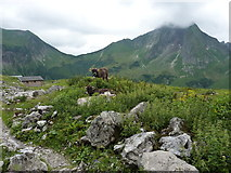 Wachposten auf dem Weg zur Wildenfeldhütte