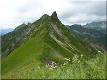 Lachenkopf und Laufbacher-Eck-Weg
