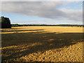 UPC3083 : Morgenschatten im Feld von Jonathan Wilkins