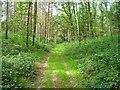 UPE3173 : Waldweg bei Prieschendorf von Sebastian und Kari