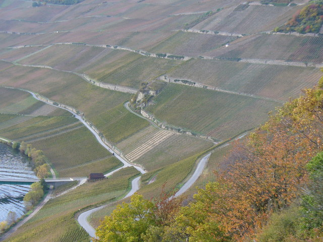 Weinterrassen bei Piesport (Terraced Vineyards)