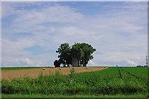 Felder bei Schönbrunn