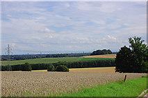 Felder bei Ziegelberg