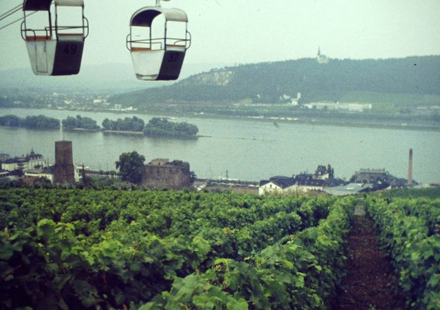 Weinberg bei Ruedesheim am Rhein (Vineyard by Rudesheim on Rhine)