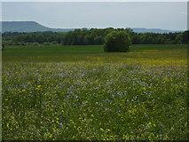 Wiese westlich von Dußlingen