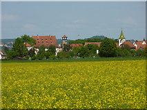 Rapsfeld vor Kilchberg