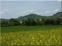 Blick über die Felder zwischen Bühl und Kilchberg zur Wurmlinger Kapelle