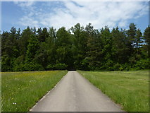 Weg in den Wald westlich von Dußlingen