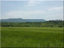 Felder westlich von Dußlingen