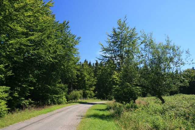 Waldweg im Nationalpark Eifel