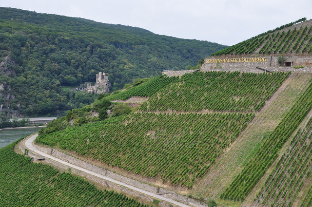 Assmannshausen : Hillside & Vineyards