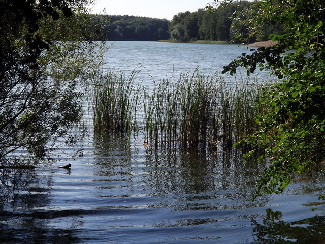 Bachmündung in den Grunewaldsee (Stream Entering the Grunewald Lake)