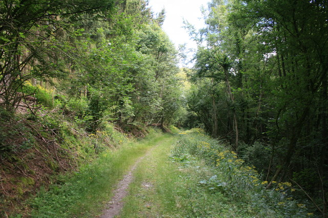 Wildnistrail im Nationalpark Eifel