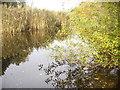 UUU8007 : Kleinmachnow - Buschgrabensee (Buschgraben Lake) von Colin Smith