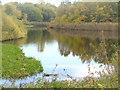 UUU8009 : Herbst an der Buschgrabensee (Autumn at Buschgrabensee) von Colin Smith