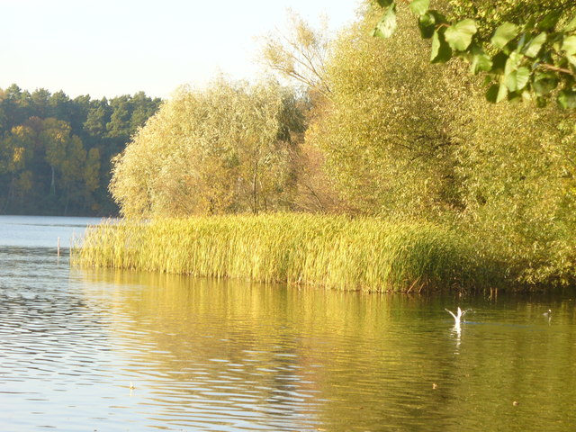 Strausberg - Ufer im Kulturpark (Shoreline in the Culture Park)