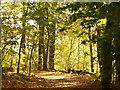 UUU7206 : Griebnitzsee Promenade von Colin Smith