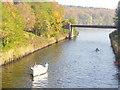 UUU7008 : Klein-Glienicke - Griebnitzseekanal (Lake Griebnitz Canal) von Colin Smith