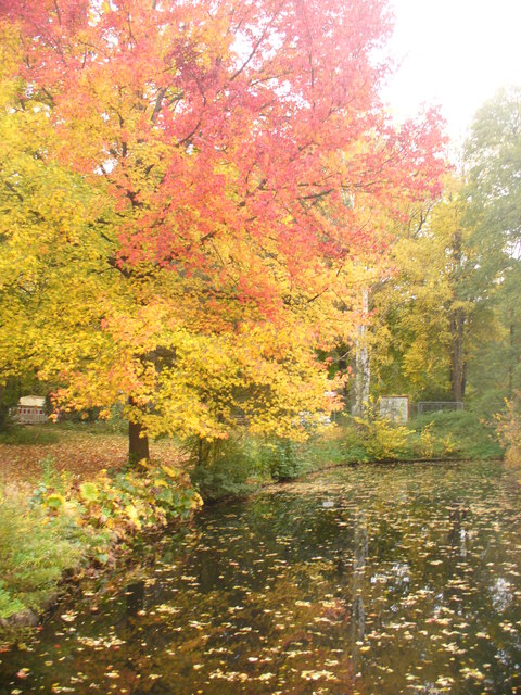 Herbst im Tiergarten (Autumn in the Tiergarten)