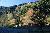 Herbstliches Tiefenbachtal