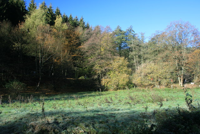 Wiese im Tiefenbachtal
